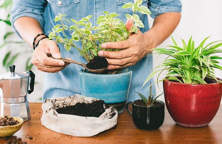 Kaffeesatz kann als Pflanzendünger verwendet werden um Geld im Alltag zu sparen.