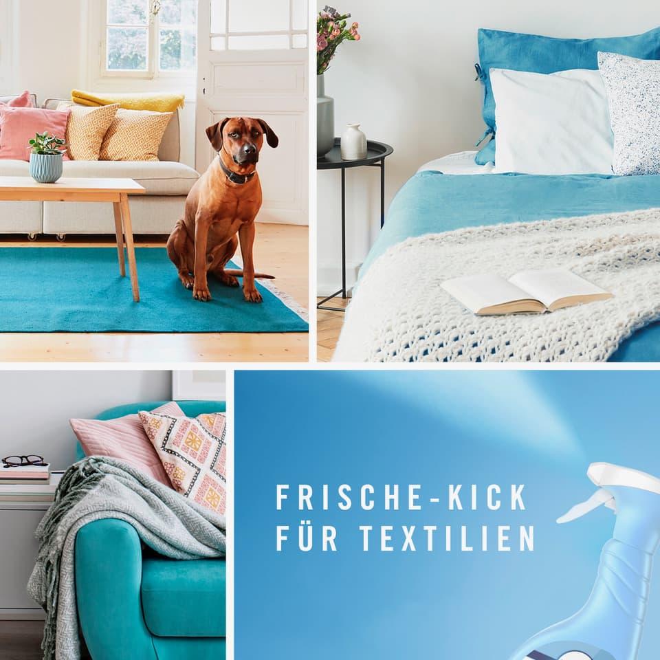Eine Bildkachel mit 4 Bildabschnitten. Hund in der Wohnung. Bett. Sofa. Febreze Produkt