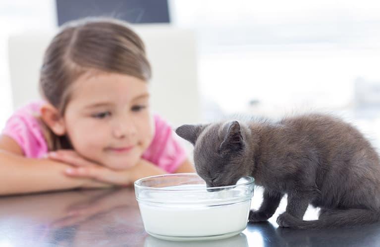 Kind sieht Katze beim Fressen zu