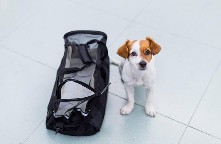Hund mit Tasche