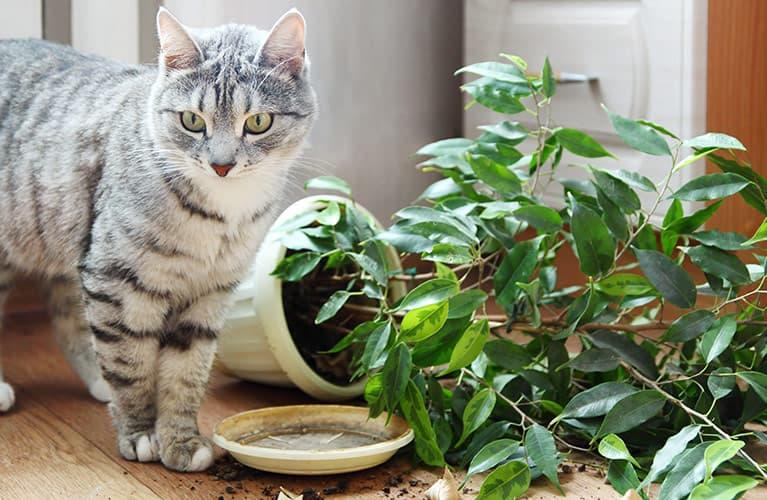 Katze mit haustierfreundlicher Pflanze