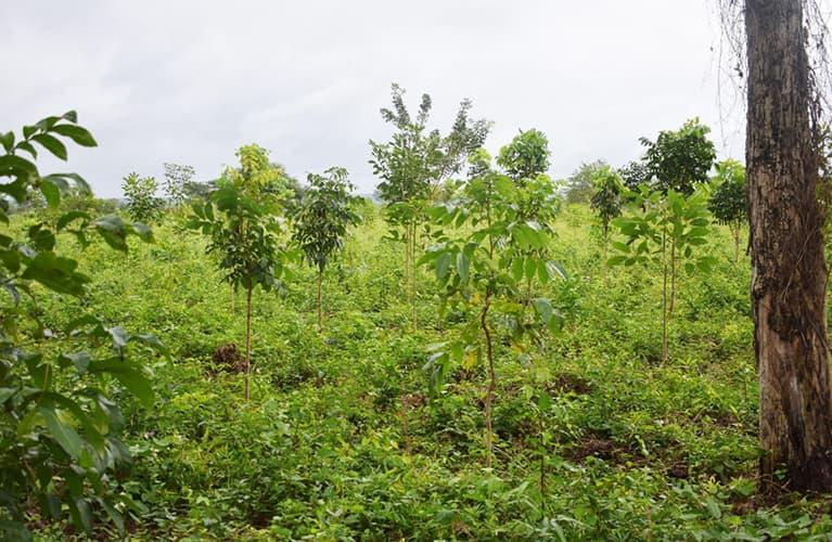Aufforsten kann jeder: Baum-Setzling kurz vor dem Einpflanzen