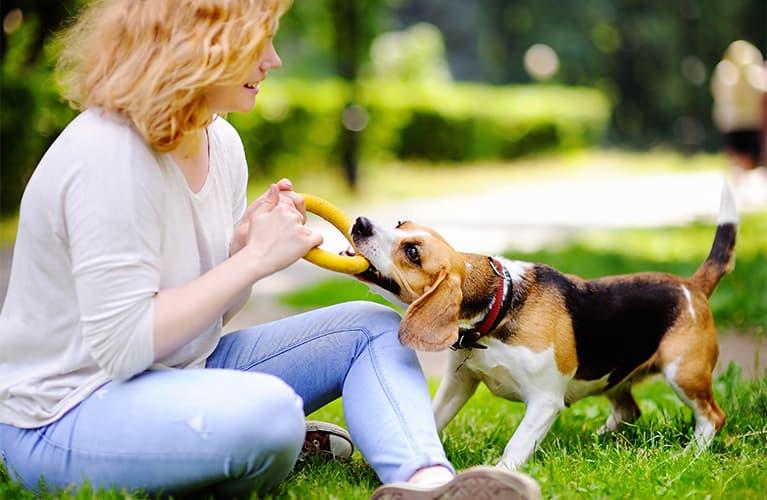 Hund und Baby aneinander gewöhnen: Drei Tipps