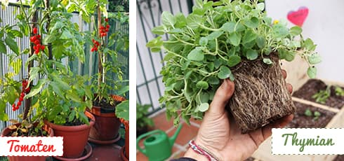 Urban Gardening 3