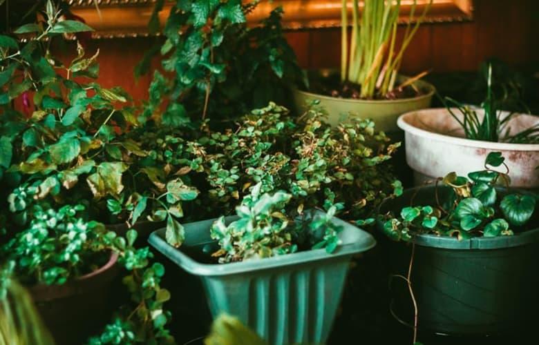 Πώς θα φροντίσουμε τα φυτά μας όσο λείπουμε από το σπίτι