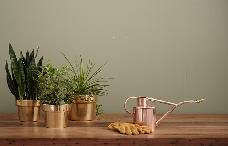 Φυτά σε γλάστρα, γάντια κηπουρικής και ποτίστρα