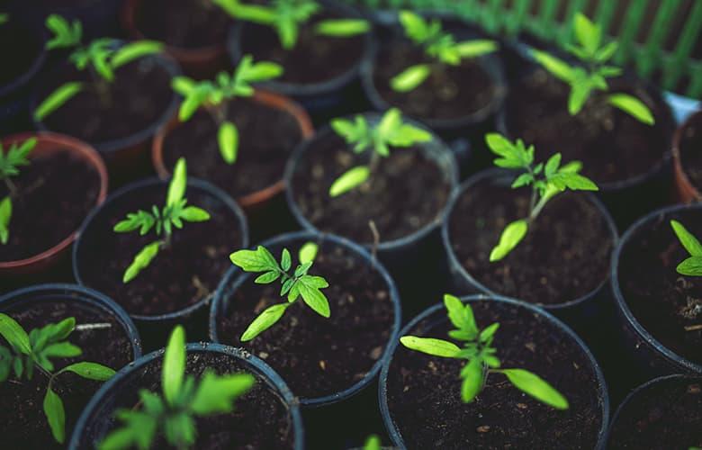 Γλάστρες με φυτά