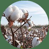 cotton icon 1