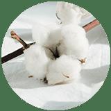 cotton icon 2